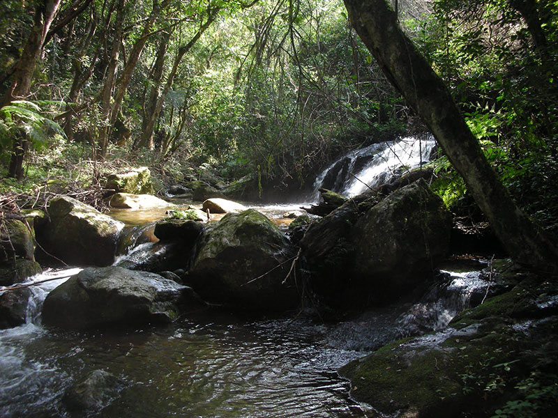 Anamudi Shola National Park