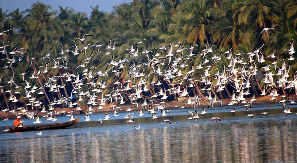 Bird Sanctuary in Kerala