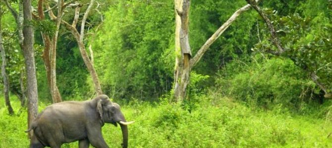 Chimmony Wildlife Sanctuary Thrissur