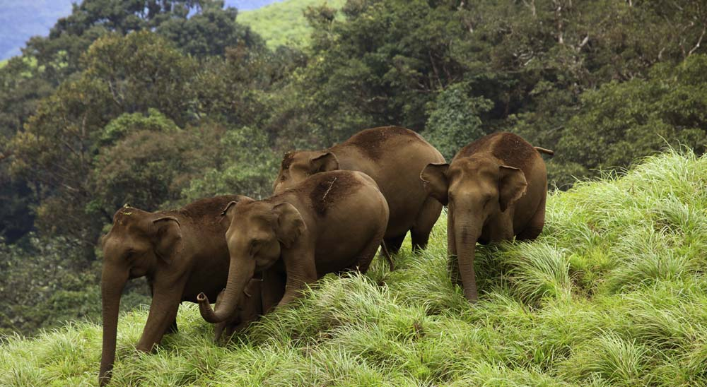 Elephant Reserves in Kerala
