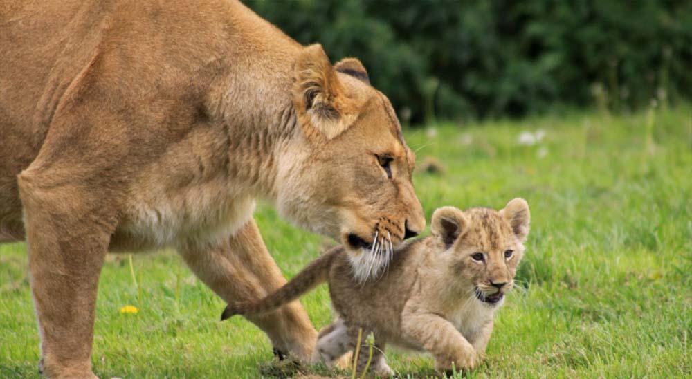 Lion Safari Park in Kerala