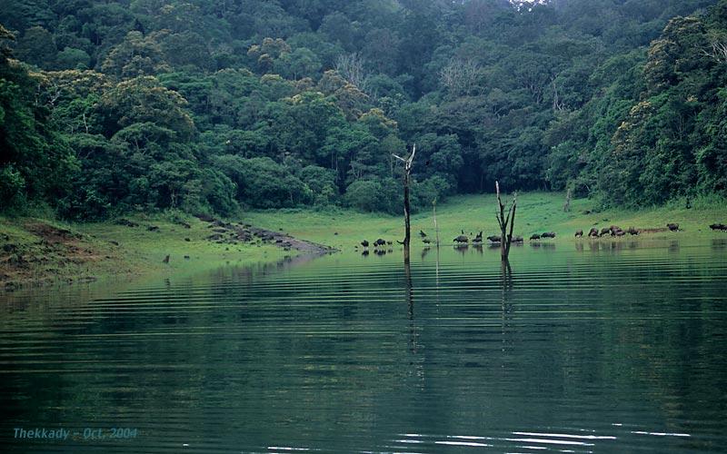Thekadi, Kerala