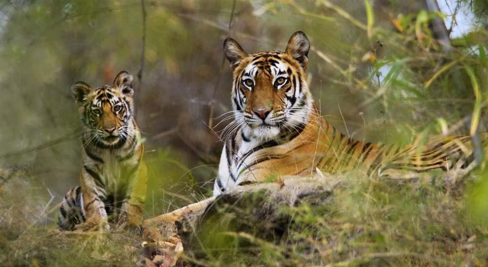 Tiger Reserves in Kerala