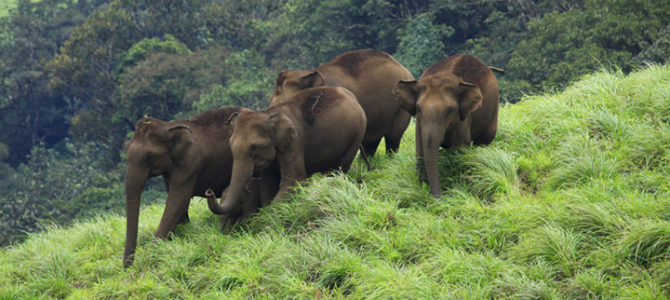 Wild Life Sanctuaries in Kerala