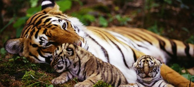 Tiger Reserves in Kerala