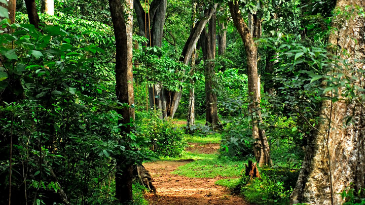 Shenduruney Wildlife Sanctuary Kollam